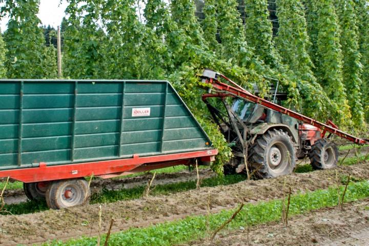 Vine removal machine